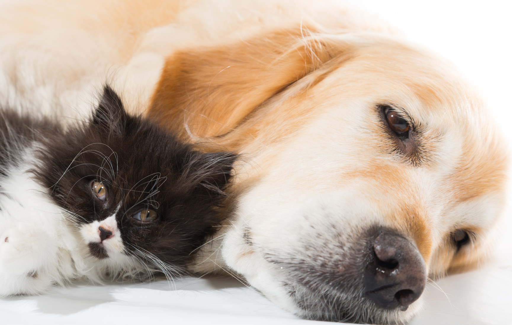 How To Safely Introduce A Cat And A Dog | TheCatSite