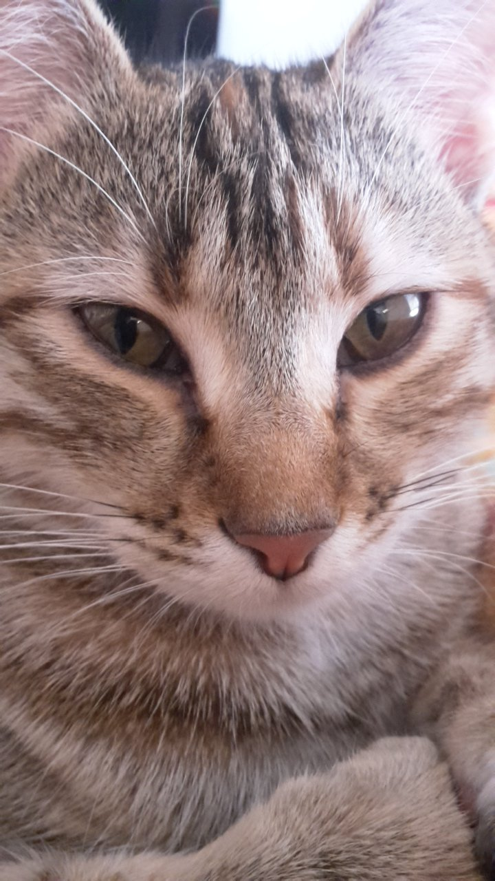 Tabby Or Bengal Mix | TheCatSite