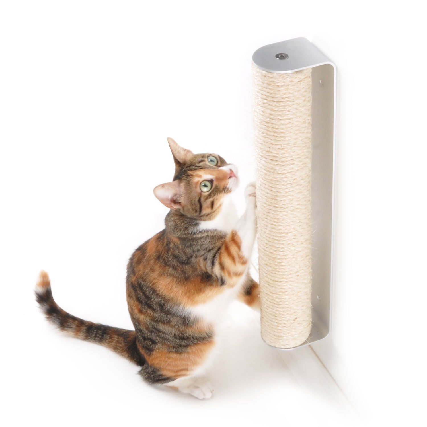 Cat Scratching Walls At Night To Wake Me Up | TheCatSite