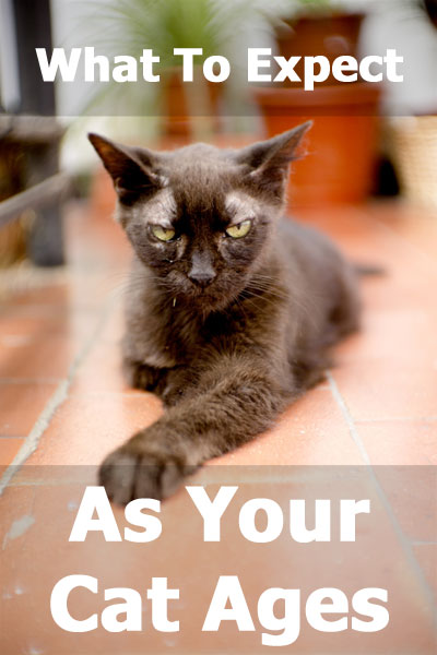 What To Expect As Your Cat Ages: Health and behavior changes in senior cats