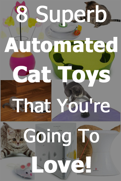 8 Superb Automated Cat Toys That You're Going To Love!