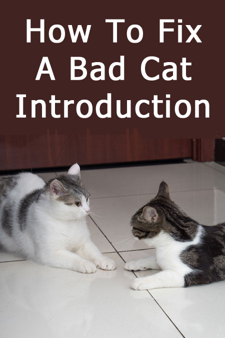 How To Fix An Unsuccessful Cat Introduction - what to do if you tried to introduce a new cat to your resident feline but failed