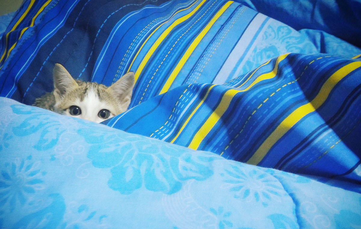 blue-blanket-cat.jpg