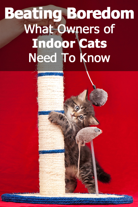 Bored Cat? What Indoor Cat Owners Need To Know