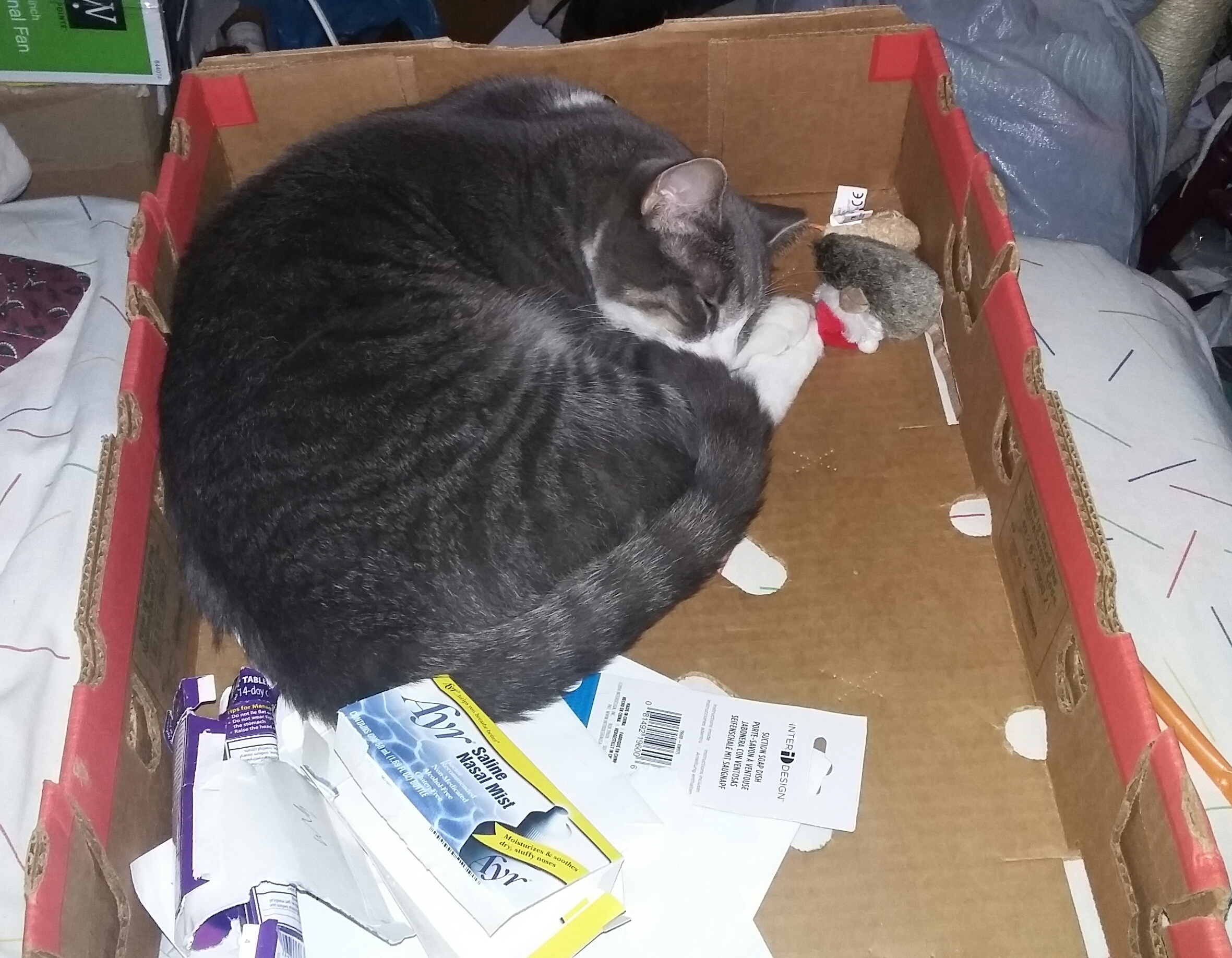 Box and mouse.jpg