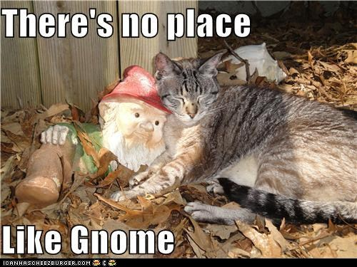 captions-cats-classic-classics-garden-gnome-home-house-theres-no-place-like-hom-6440236288-1.jpg