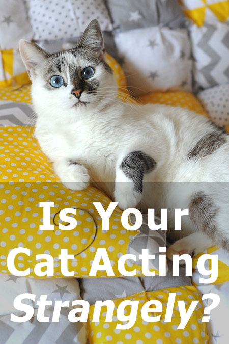 Is your cat acting strangely? Is Kitty suddenly aggressive? Is she hiding from you, or perhaps she's stopped eating? Here's what changes in a cat's behavior could mean and what you should be doing