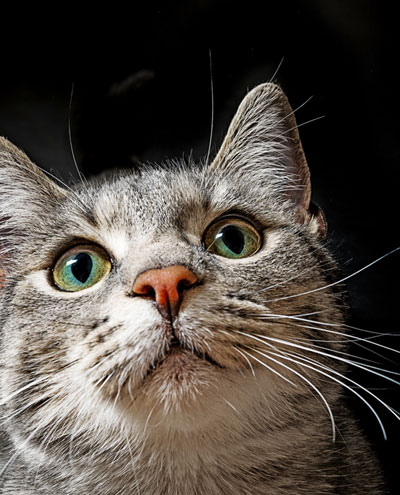 Are cats nocturnal? Understanding that can help you keep your cat from waking you up at night
