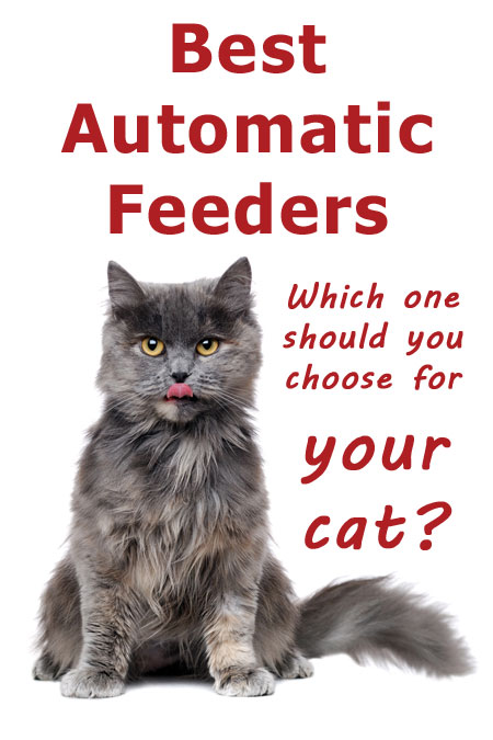 Best Automatic Feeders For Cats - Which One Should You Choose?