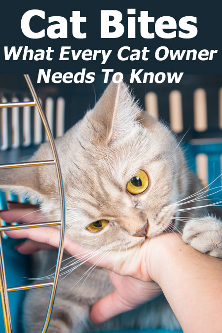 Cat Bites - What Every Cat Owner Needs To Know