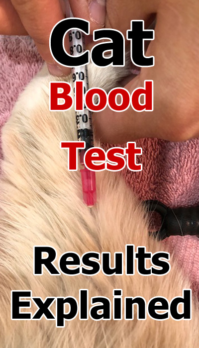 Cat Blood Test Results Explained