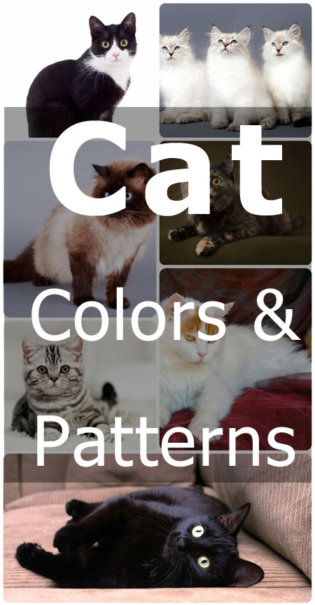 Cat Colors and Patterns. Learn all about the terms used by the pros to describe cats