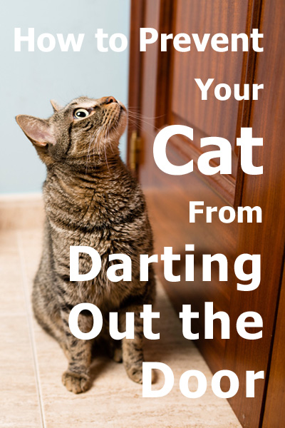 How to prevent your cat from darting out the door