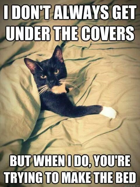 cat-dontalways-get-under-covers-but-whenido-youre-trying-make-bed-quckmemecom.jpeg