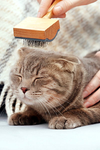 How long does it take to groom a cat?