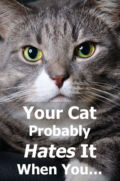 Your Cat Probably Hates It When You... Learn what common things that cat owners do can actually upset your cat