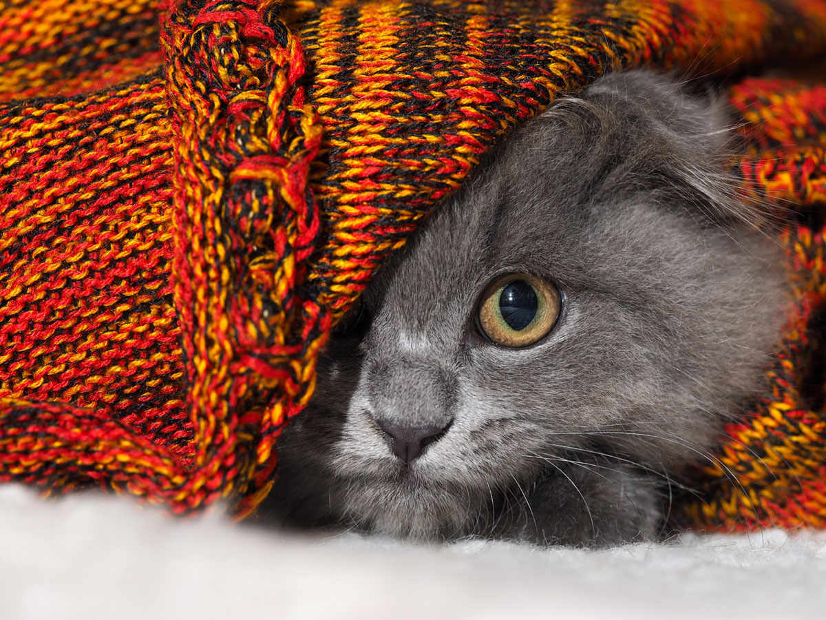 Cat Acting Strangely? Here's What It Could Mean | TheCatSiteScared Kitten Hiding