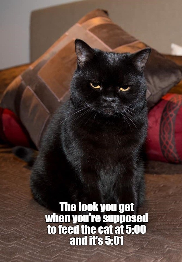 cat-look-get-supposed-feed-cat-at-500-and-s-501.jpg