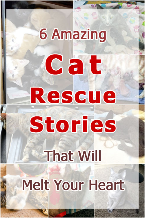 6 Amazing Cat Rescue Stories That Will Melt Your Heart