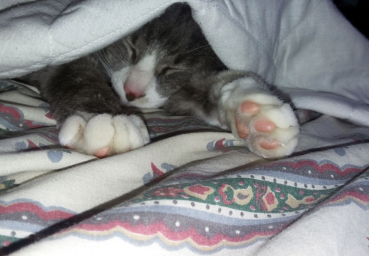 cat-sleeping-under-blanket.jpg