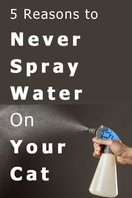 5 Reasons To Never Spray Water On Your Cat