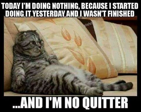 cat-today-doing-nothing-because-started-doing-yesterday-and-iwasnt-finished-catshit-and-no-qu...jpeg