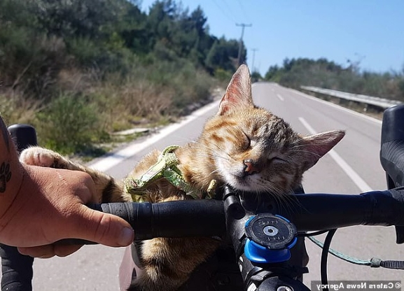 cat-travels-the-world-on-a-bicycle-after-backpacker-adopts-the-stray-kitten-and-customises-bik...jpg
