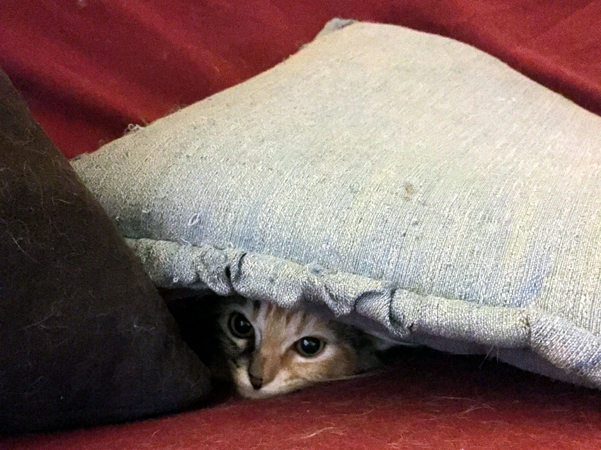 cat-under-pillow.jpg