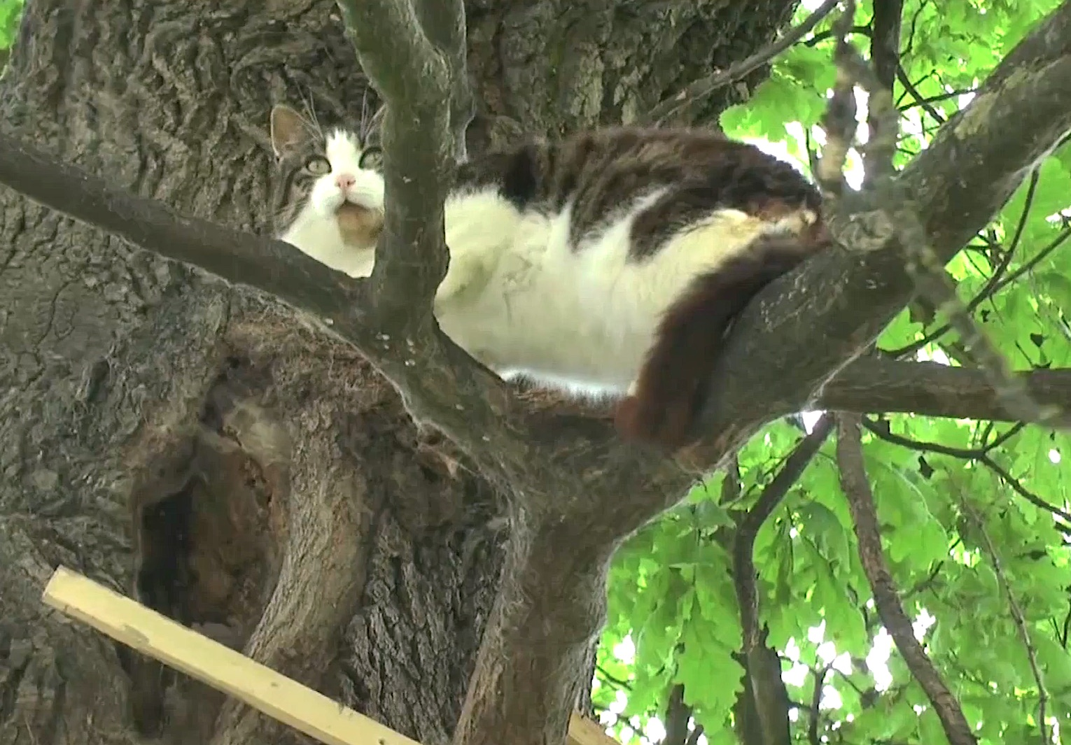 cat-up-tree-for-6-years-3.jpg