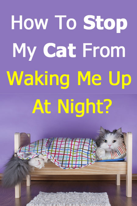 How To Stop My Cat From Waking Me Up At Night?