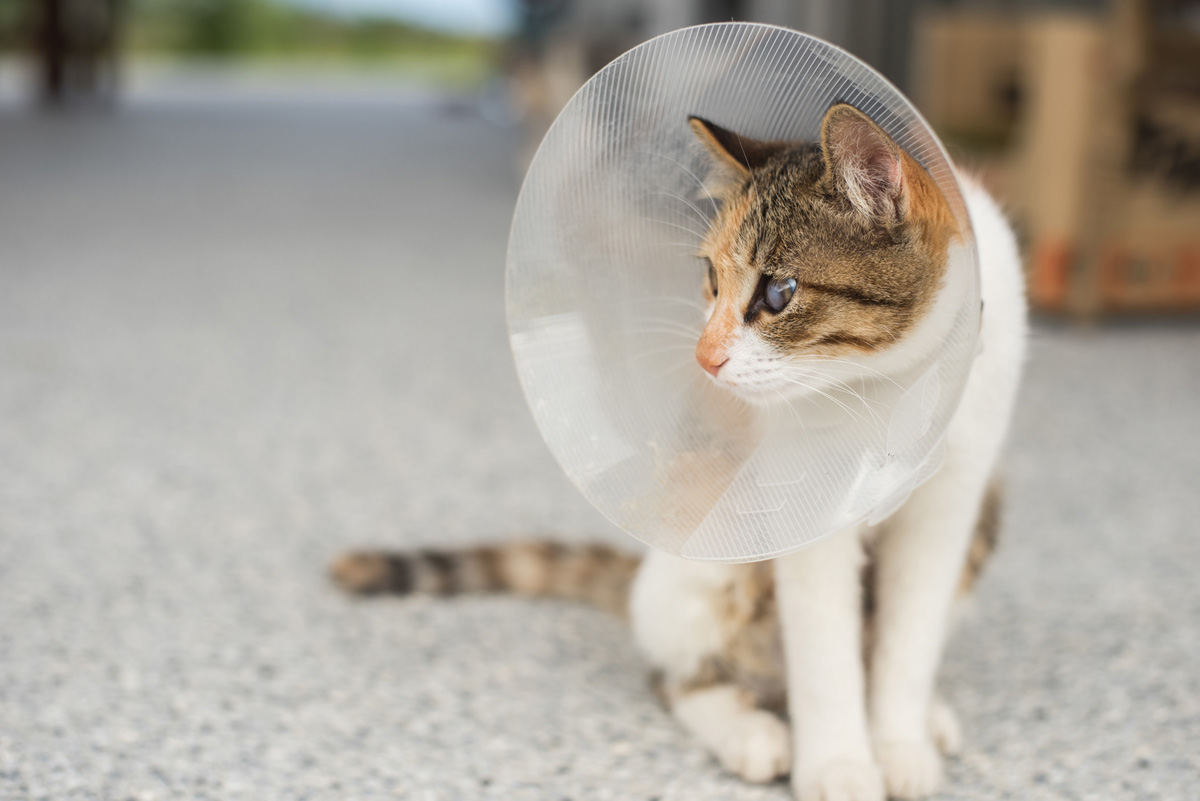 Ask your vet in advance about the hidden fees and the total cost of getting your cat fixed