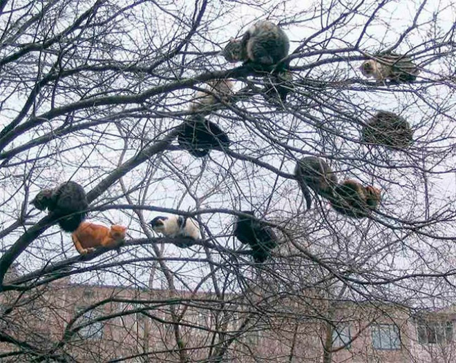 cats-in-trees1.jpg
