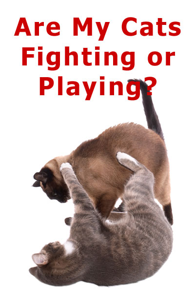 Are my cats fighting or playing?