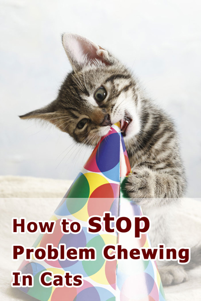 How To Stop Problem Chewing In Cats