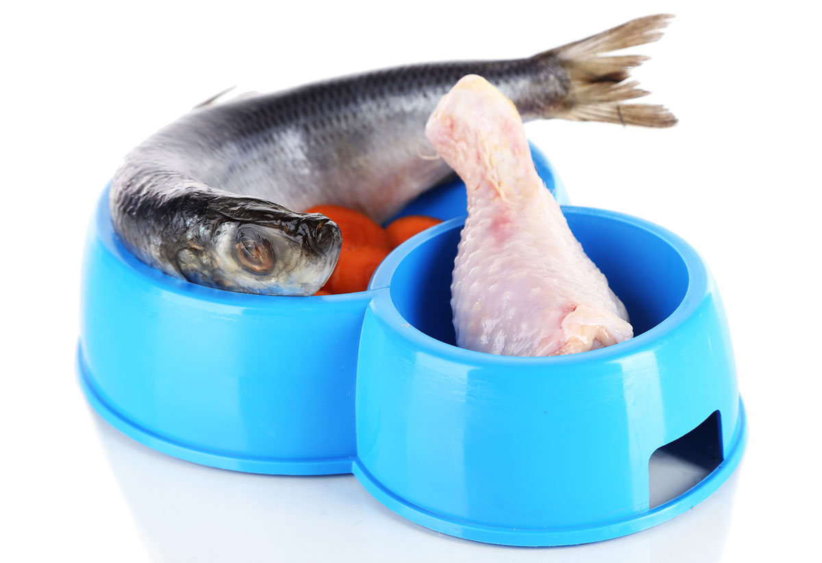 Chicken and fish are potential allergens for cats