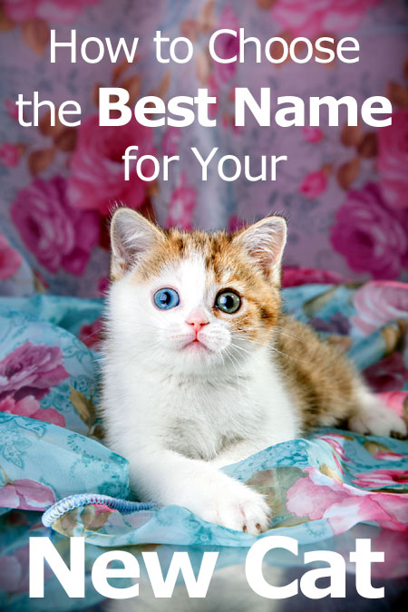 How to choose the best name for your new cat