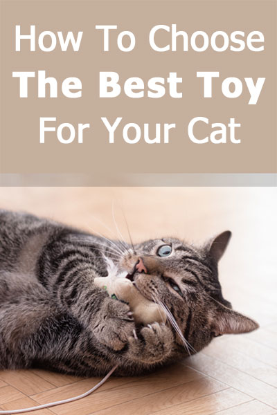 How To Choose The Best Toy For Your Cat - a complete guide with concrete examples