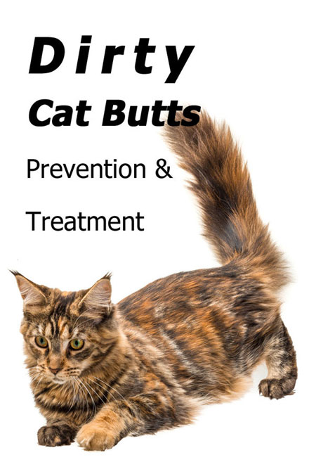Be Kind To Your Cats' Behinds! Dirty Cat Butts Prevention And Treatment