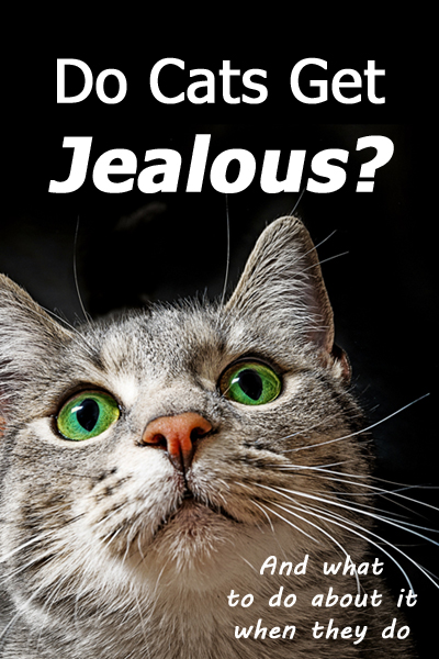 Do Cats Get Jealous? (and What To Do About It When They Do)