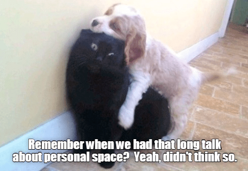 dog-hugging-a-distressed-looking-cat.png