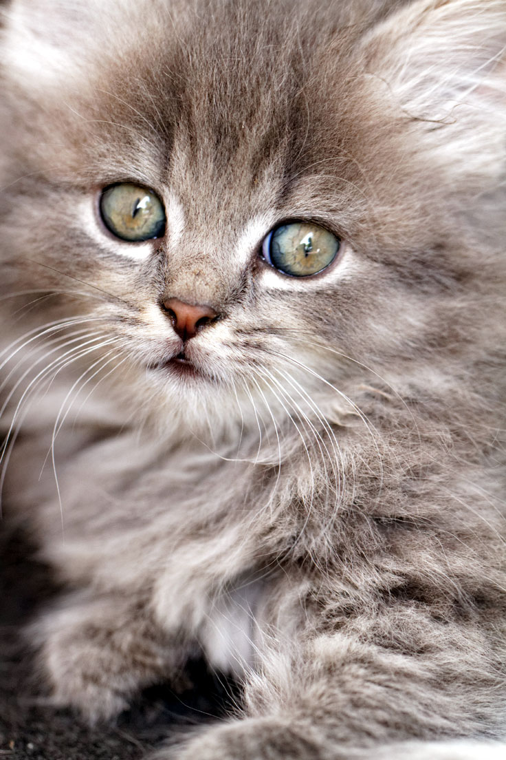 your cat may be a domestic longhair - of no particular breed