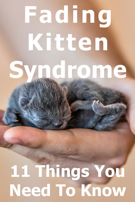 Fading Kitten Syndrome: 11 Things You Need To Know – Cat