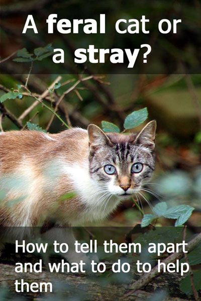 A Feral Cat Or A Stray Cat? How To Tell The Difference