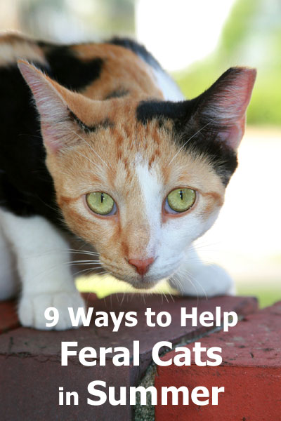 9 Ways To Help Feral Cats During Hot Summer Months