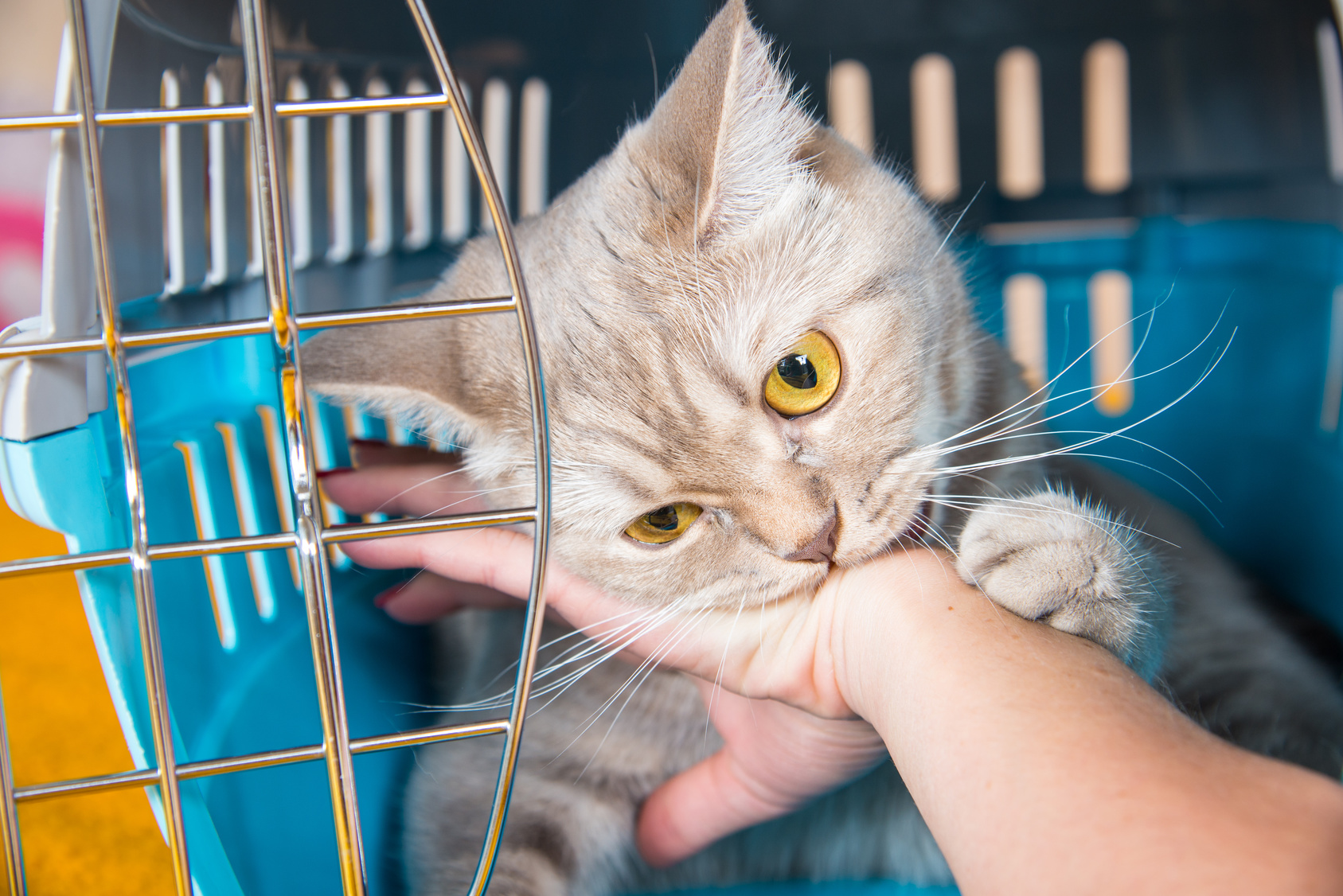 cat bites what every cat owner needs to know the cat site