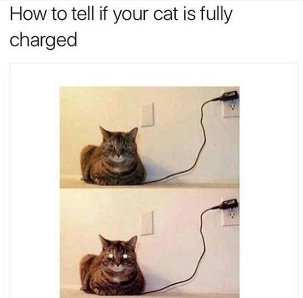 fully-charged-cat.jpg