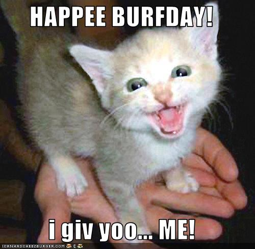 funny-pictures-kitten-is-your-birthday-present.jpg