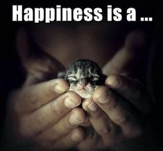 happiness is a kitten.jpg