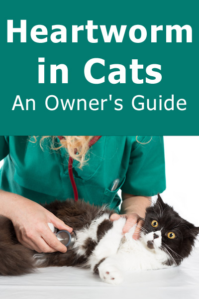 Heartworm in Cats: An Owner's Guide. Everything you need to know about the risk of heartworm in felines, including treatment and prevention