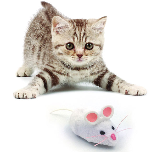 Hexbug-Mouse-Robotic-Cat-To.jpg